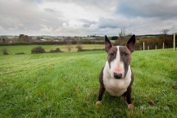 Bella in the field