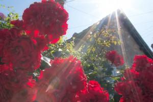 Flowers around the village